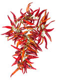 String with dry hot peppers isolated Royalty Free Stock Photos
