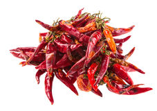 String with dry hot peppers isolated Stock Images
