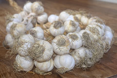 String of garlic Stock Image