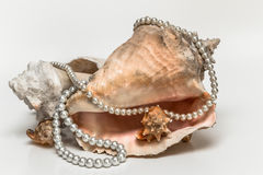 String of pearls thrown over the sea shells Stock Images