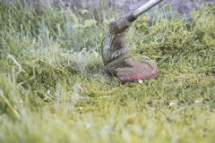 String trimmer mowing the grass, grass particles flying around Stock Photo