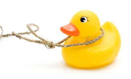 String and yellow duck. Stock Image