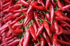 Stringhe del pepe di peperoncino rosso rosso Immagini Stock
