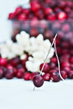 Stringing cranberries and popcorn Royalty Free Stock Image