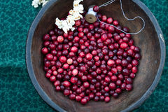 Stringing popcorn and cranberries Royalty Free Stock Photos