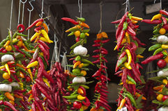 Strings of chillies and garlic. Colourful chillies, garlic and herbs hanging Stock Image