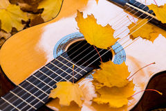 Strings of classical guitar and leafs Stock Photo