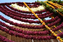 Strings of flowers, Jodhpur, Strings of flowers, Rajastan Royalty Free Stock Photo
