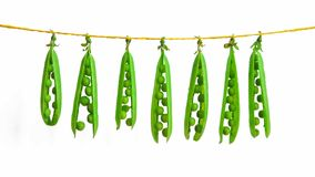 Strings of green peas hanging from a rope on stock photography