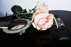 Strings and roses, symbols. Roses on the strings of a black elegant guitar, instrument of sound, symbols of gratitude and love Royalty Free Stock Image