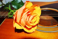 Strings and yellow rose, symbols. A yellow rose on the strings of a guitar, evoking joy, desire and love royalty free stock photo
