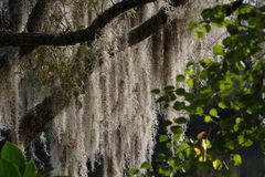 Stringy δέντρο Στοκ εικόνα με δικαίωμα ελεύθερης χρήσης