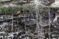 Stringy корни от заводов и засорителей Стоковые Изображения