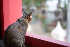 Cat look out window day time. Strip Cat look out big red frame window day time royalty free stock image