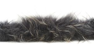 Strip of fur isolated Royalty Free Stock Photo