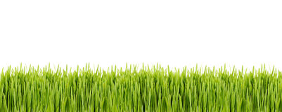 Strip of green grass on white background. Strip of fresh green grass on white background Royalty Free Stock Photo