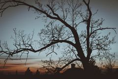 Strip of tree branches silhouette against sunset background stock photography