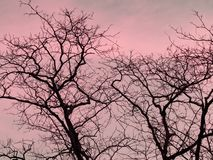 Strip of tree branches silhouette against sunset background of orange and pink sky stock photo