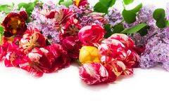 Strip of tulips and lilacs Stock Photos