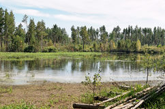 The strip of woods on a dead lake. The strip of mixed forest on a dead lake on a Sunny day Stock Images