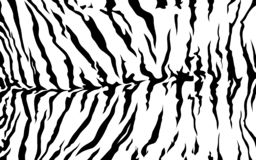 Stripe animals jungle tiger zebra fur texture pattern seamless repeating white black. Print stock illustration