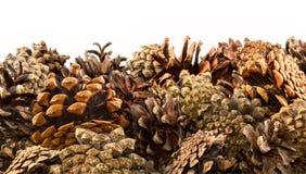 Stripe, border of pine cones, isolated on white Stock Image