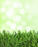 Stripe of fir tree branches on blurry background Stock Photography