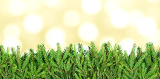 Stripe of fir tree branches on blurry background Royalty Free Stock Images