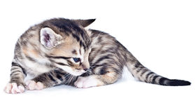 Stripe Kitten Stock Images