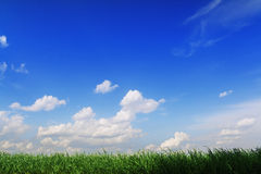 Stripe of rich green grass against blue sky Royalty Free Stock Images