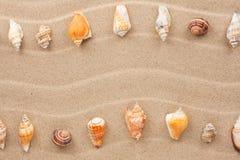 Stripe of sea shells lying on the sand Stock Photos