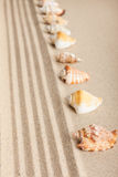 Stripe of seashells lying on the sand Royalty Free Stock Photography