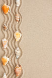 Stripe of seashells lying on the sand Royalty Free Stock Photos