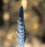 Striped белое и серое перо с естественной предпосылкой Стоковое Изображение RF