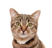 striped ворот кота стоковое изображение rf