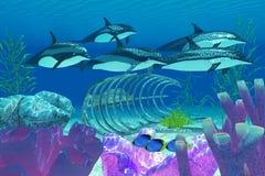 Striped дельфин и развалина Стоковые Изображения RF
