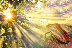 Striped жук греясь в солнечном свете (макрос) Стоковая Фотография RF