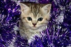 Striped игры котенка с сусалью рождества Стоковые Изображения RF