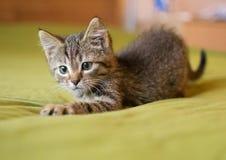 Striped игры котенка Стоковые Изображения RF