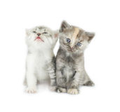 2 striped изолированные котята Стоковое фото RF