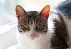 Striped и белый кот лежит на windowsill стоковые фото
