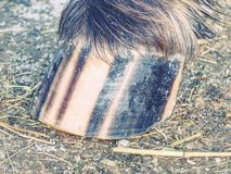 Striped копыто коричневой поставленной точки ponny лошади, детали нашивок стоковое изображение