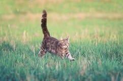 Striped котенок бежит весело через луг весны со своим стоковое фото