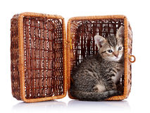 Striped котенок в корзине Стоковая Фотография