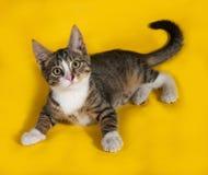 Striped котенок лежа на желтом цвете Стоковое Фото