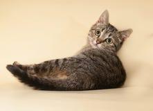 Striped котенок лежа на желтом цвете Стоковые Изображения RF