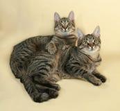 2 striped котенок лежа на желтом цвете Стоковое Фото