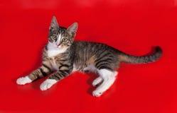 Striped котенок лежит на красном цвете Стоковые Изображения