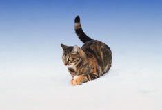 striped котенок играя с снегом в зиме на улице Стоковое Фото