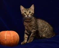 striped котенок и тыква Стоковая Фотография